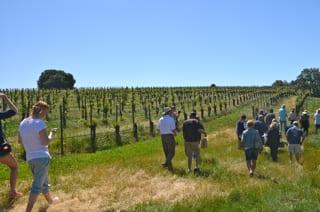 Strolling Buttonwood Farm Winery Vineyards