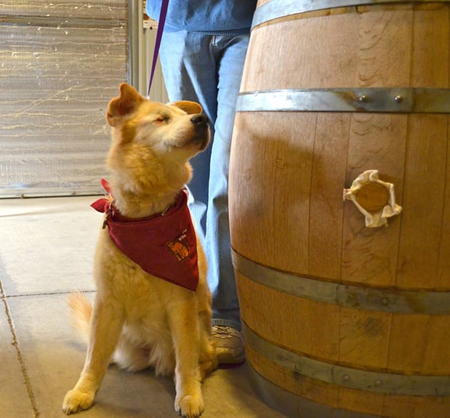 Elcuse Wines blind dog Toby