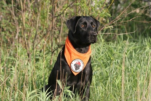 Pearl: Search & Rescue Dog