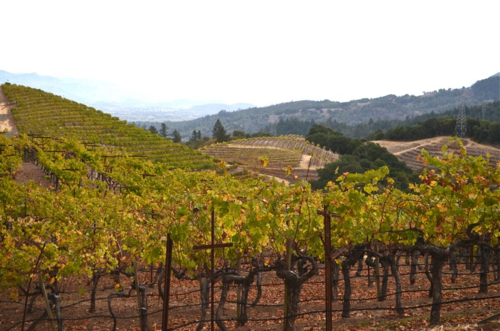 Newton Vineyards