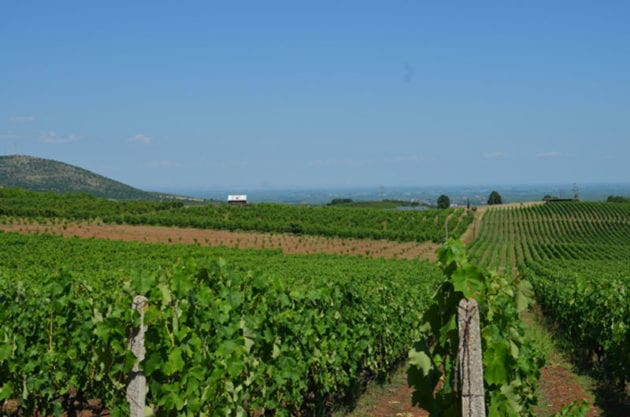 Elinos Vineyards View