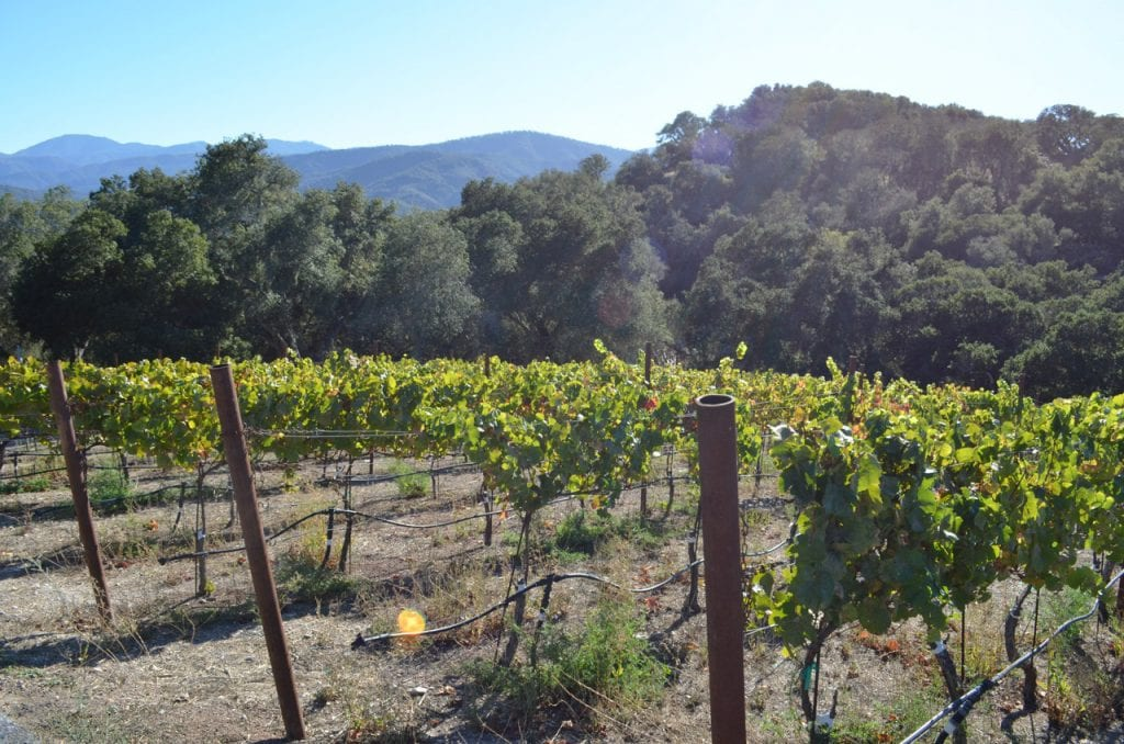Holman Ranch Vineyard Carmel Valley