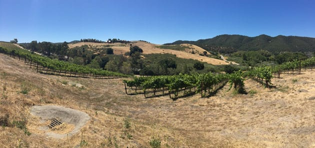 View at Bassi Vineyards