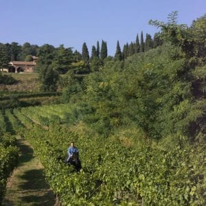 Alberto Coffele in the Vineyards