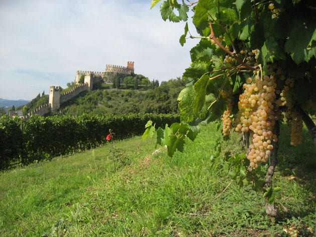 Castello di Soave with Garganega Grapes