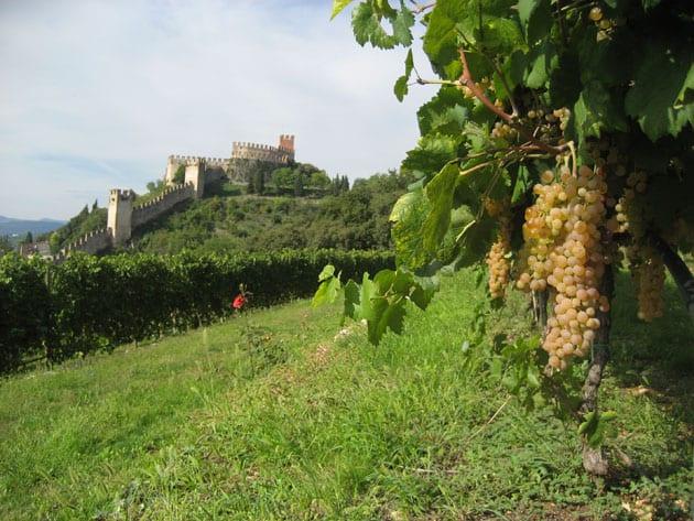 Castello di Soave with Garganega Grapes