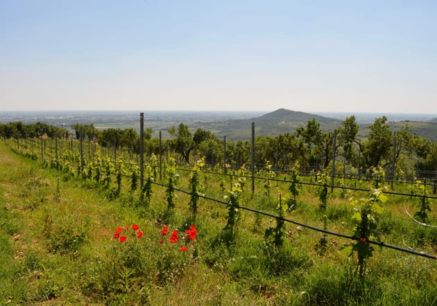The Vineyards of Vignalta
