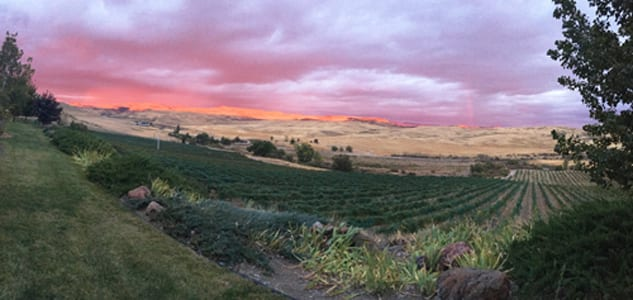 Idaho Wines: Sunset View at 3 Horse Ranch Vineyards
