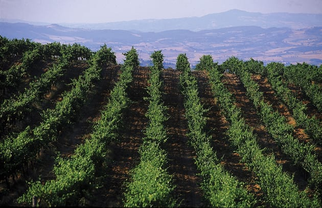 Luce Vineyards View in Montalcino