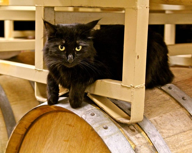 Winery Cat M2 Wines. Photo: Randy Caparoso