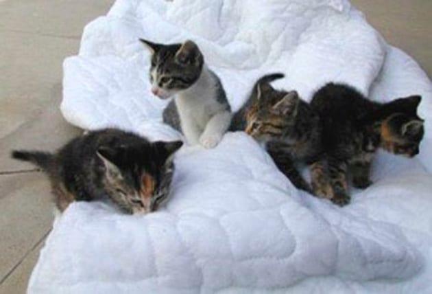 Cappi's Kittens