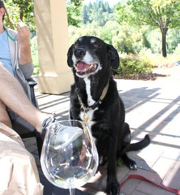 Hartford Wines-dog friendly