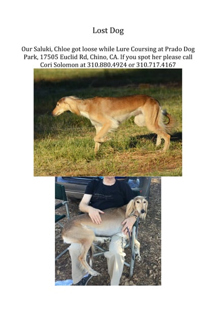 Lost Dog Rescue Original Flyer