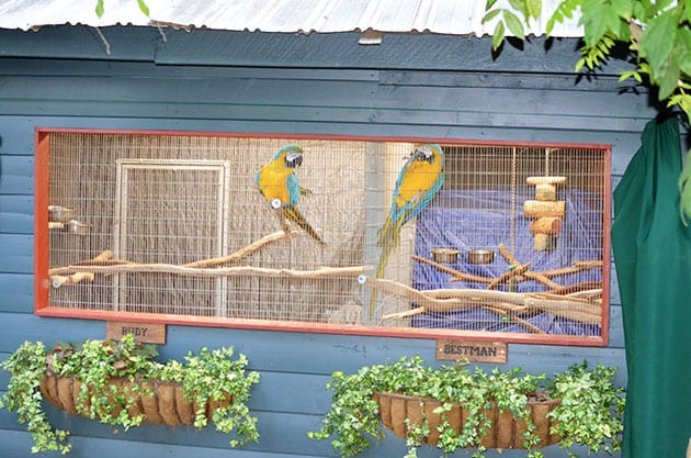 Wine & Roses Macaws Rudy and Bestman