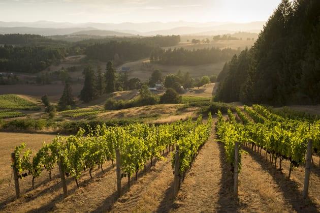 Bishop Creek Vineyard. Photo Courtesy Domaine Nicholas Jay