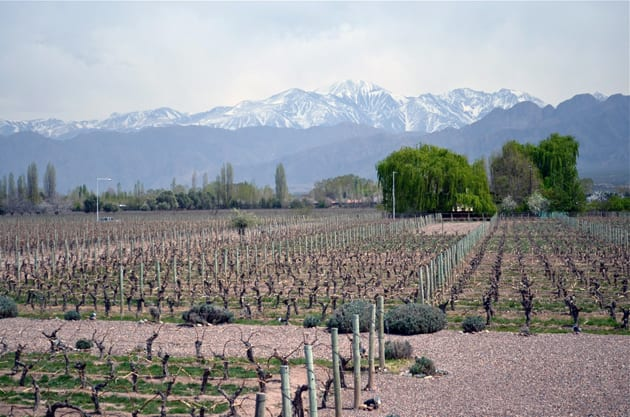 Mendoza Vineyard where grapes grow for Malbec wines