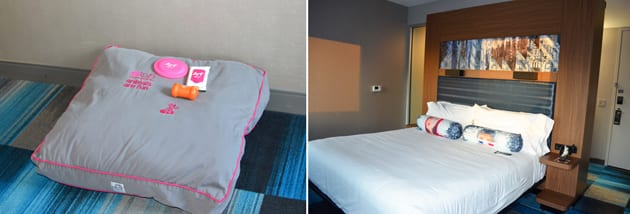 Aloft Guest Suite with Arf Program Dog Package
