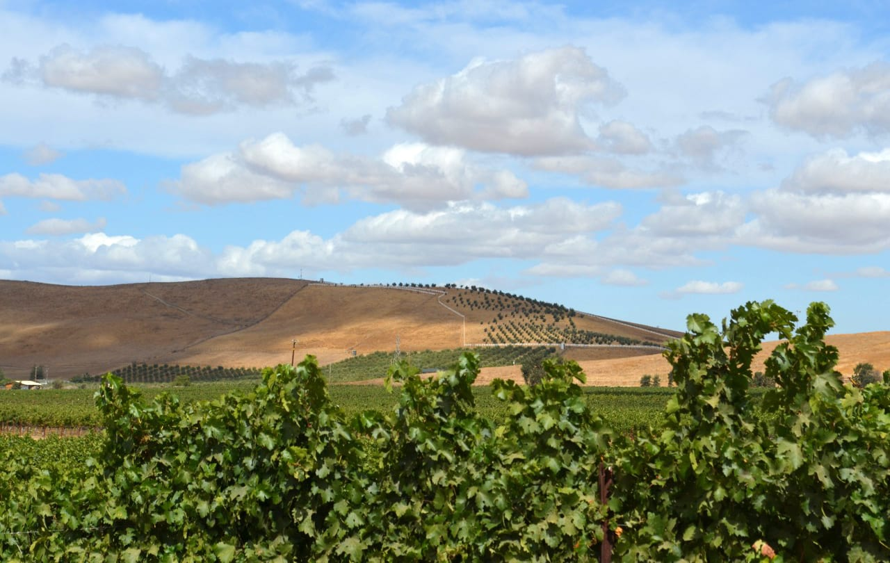 Ghielmetti Estate Vineyard, Livermore Wine Country