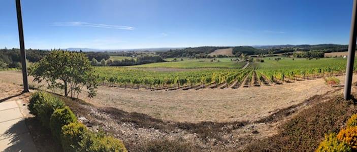 Eola-Amity Hills Vineyard View