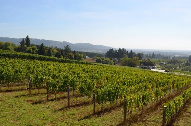 Bells Up Winery Vineyards