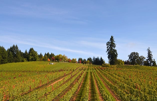 Lenne Estate Vineyard Yamhill Carlton AVA