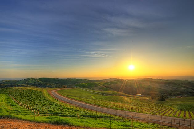 Sunset over the Vineyards © Daou Estate Vineyards & WinerySunset over the Vineyards © Daou Vineyards & Winery