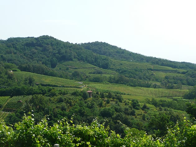 Travaglini vineyards