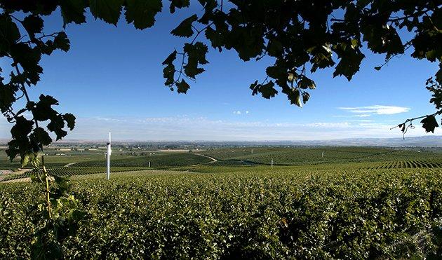 Seven Hills Vineyard